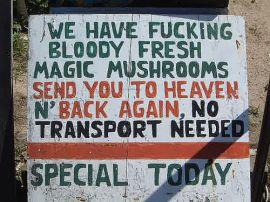 magic_mushrooms